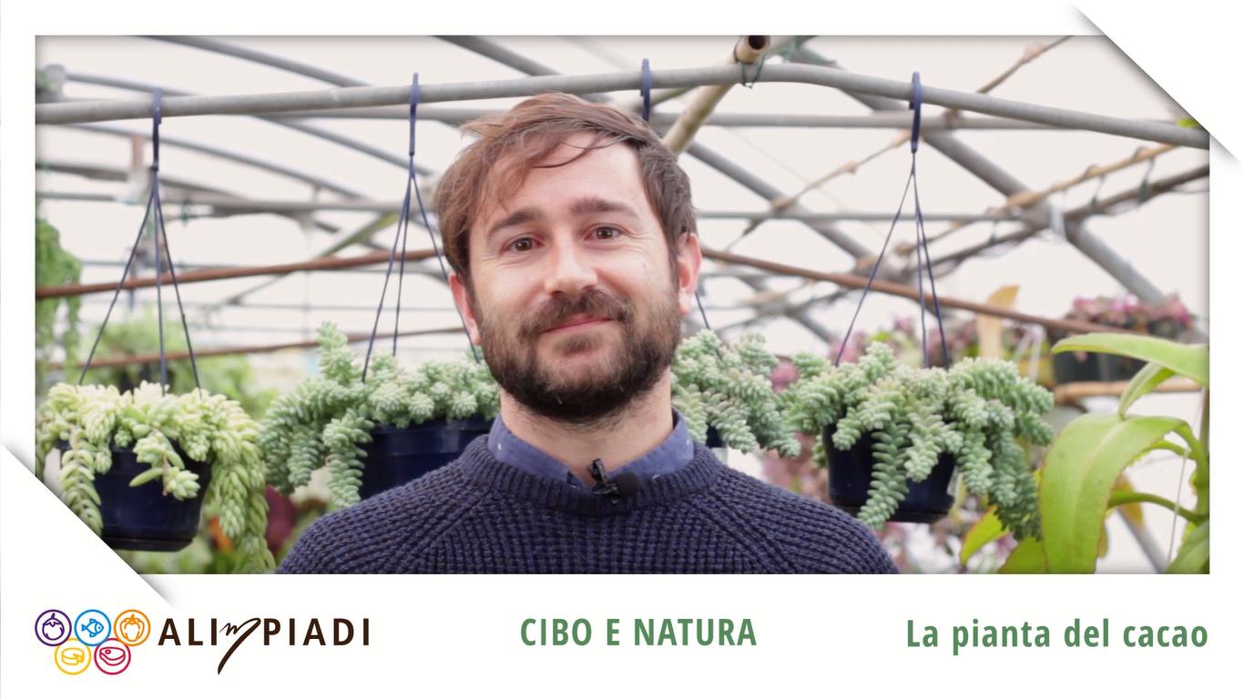 La pianta del cacao - Cibo e natura - Alimpiadi