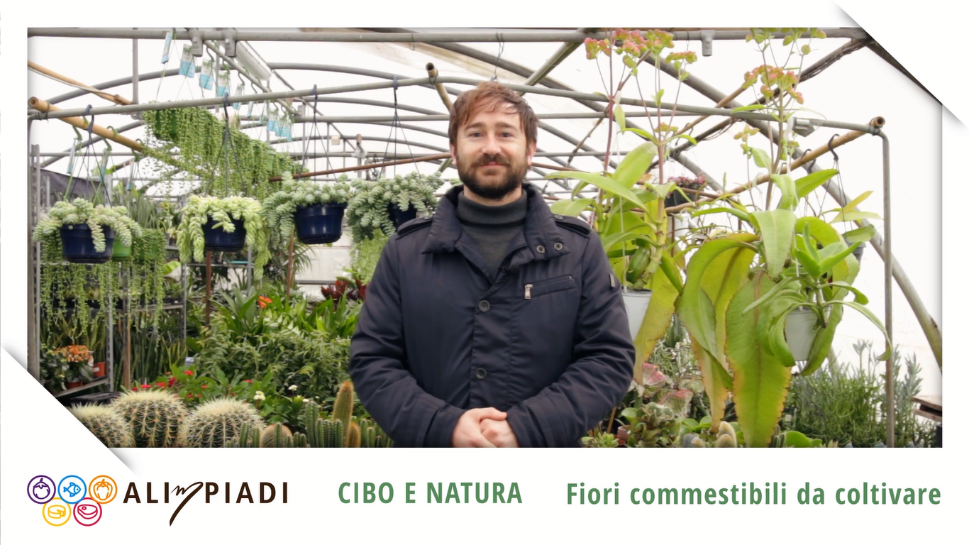 Fiori commestibili da coltivare - Cibo e natura - Alimpiadi