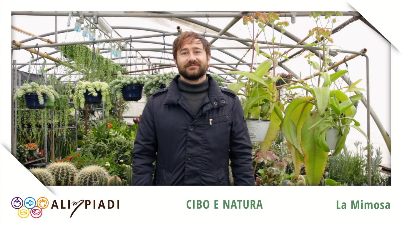 La Mimosa - Cibo e natura - Alimpiadi